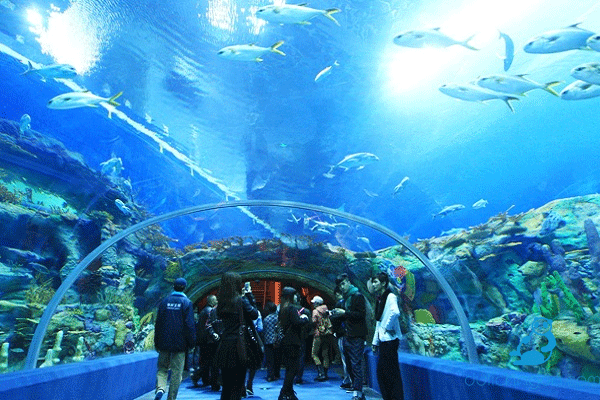 National Oceanographic Museum of Vietnam: All You Need to Know